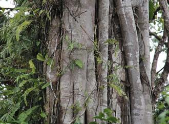 Bosques Urbanos cuentan con dos aliados de alto nivel