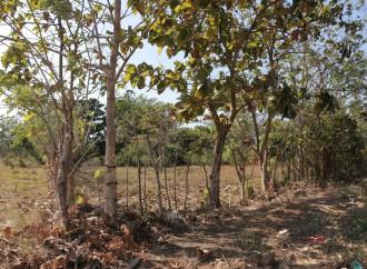 Alcaldía y Miviot recorren terreno de futuro Parque Municipal del Este