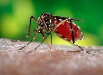 OMS declara emergencia de salud pública de importancia internacional por virus del Zika