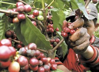 Panamá y Costa Rica emprenden acciones para mejorar seguridad humana de migrantes temporales Ngäbe Buglé en la Ruta del Café