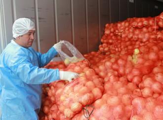 Panamá importará cebolla de Perú y Holanda