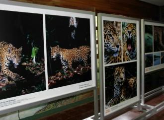 Exhibición Tierra de Jaguares en el Parque Summit estará abierta al público hasta el 6 de agosto