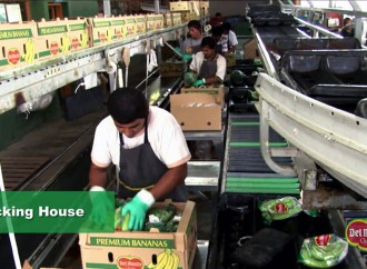 Presidente Varela solicita a la Asamblea el respaldo para aprobar contrato ley que reactiva bananeras en Barú