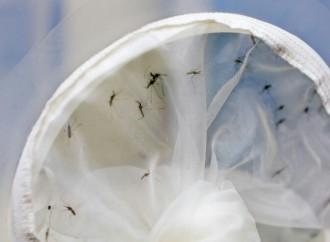 Países de América discuten en Cuba medidas contra virus transmitidos por mosquitos