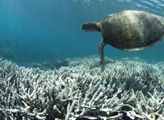 PNUMA: Cambio climático causará blanqueamiento coralino anual