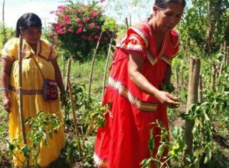 Red Territorial de Nuevo México en Alanje se fortalece con desarrollo sustentable de las tierras