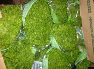 AUPSA retiene lechugas ante la posible contaminación con residuos de plaguicidas
