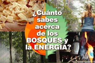 ¿Cómo celebrar este 21 de marzo el Día Internacional de los Bosques?