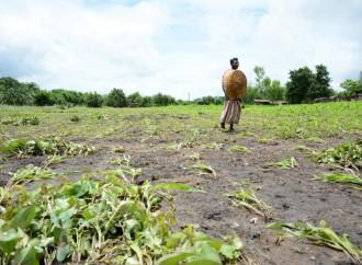108 millones de personas padecen ya grave inseguridad alimentaria