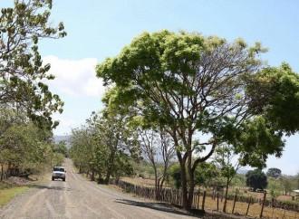Presidente Varela pone en marcha rehabilitación de más de 90 kilómetros de carretera en Los Santos