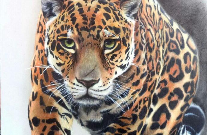 Exposición del Museo Juan Santamaría muestra la fauna mediante trazos en lápiz de color