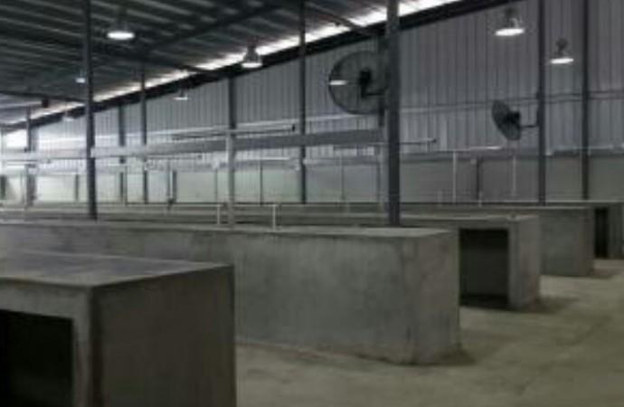 Inician obras para renovar el Mercado de San Felipe Neri