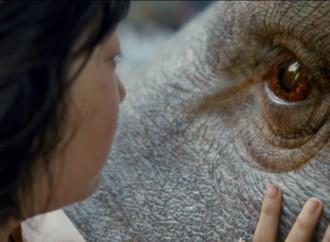 Dale una vista altrailer oficial y conoce al enorme animal que protagoniza Okja