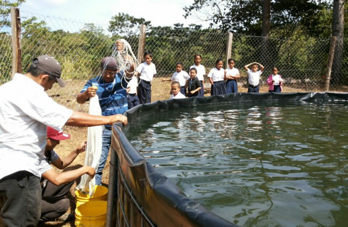 ARAP fortalece producción acuícolas en Las Minas, Ocú y Los Pozos