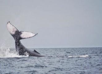 Costa Rica será sede del Diálogo Global sobre los Océanos