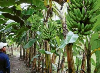Gobierno crea régimen especial para trabajadores bananeros