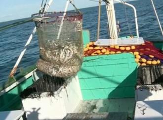 OMC: Avanzan negociaciones sobre las subvenciones a la pesca