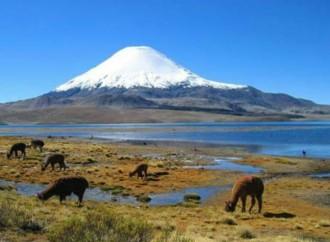 Chile incorporaráen malla curricular escolarcambio climático y la sustentabilidad