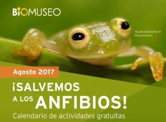 Calendario de ActividadesAgosto 2017 del #Biomuseo¡Salvemos los Anfibios!