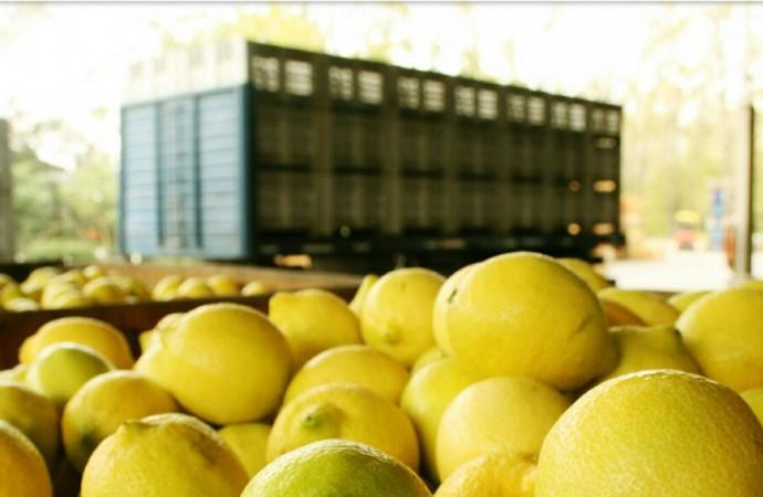 Argentina tiene luz verde para exportar limones a Estados Unidos