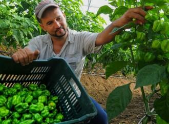 RD celebra Día Mundial de la Agricultura con hechos; produce 85% de lo que consume