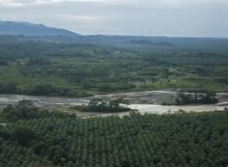 Más de 124 mil hectáreas en cultivos fueron afectados por la tormenta Nate en Costa Rica