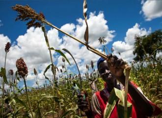 FAO pide al G7 medidas urgentes para frenar la malnutrición a nivel mundial