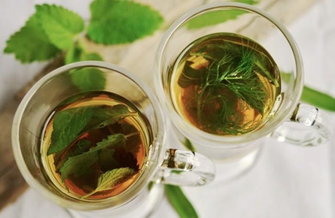 Historia del té: ¿De dónde viene y cuáles son sus beneficios?