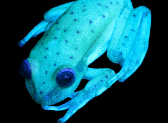 Científicos del Museo Argentino de Ciencias Naturales revelaron casi 150 nuevas especies en 2017