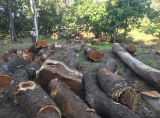 Autoridades de Costa Rica decomisan más de 80 millones en madera cortada ilegalmente