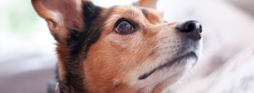 Delta introduce requisitos mejorados para los clientes que viajan con animales de servicio o apoyo a partir de marzo