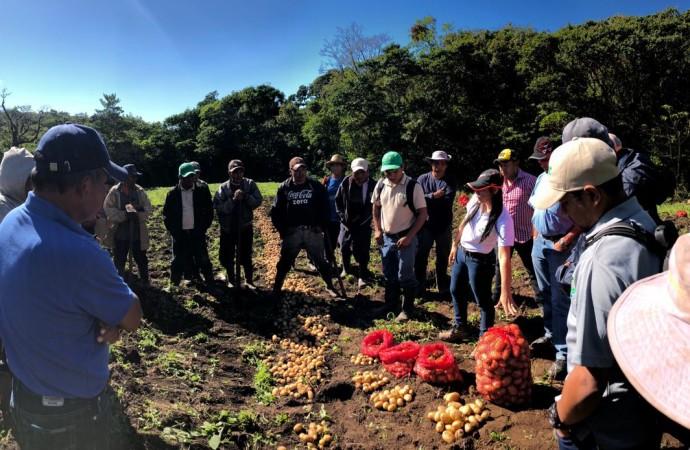 Productores de la comarca Ngäbe-Buglé reciben semillas de papa por parte del MIDA