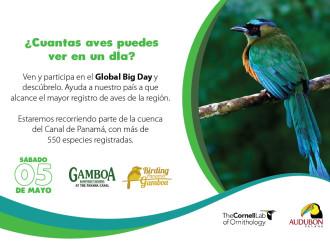 Panama se prepara para el Global Big Day