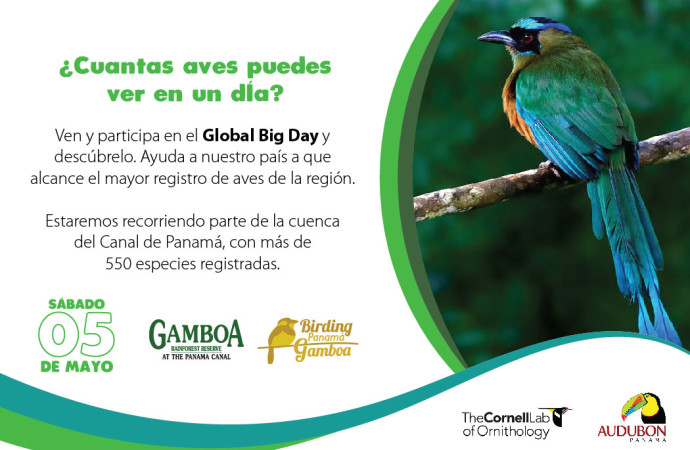 Panama se prepara para el Global Big Day
