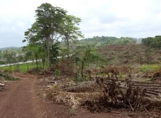 Ministerio de Ambiente mantiene verificación del desempeño ambiental de megaproyectos viales en Panamá Oeste