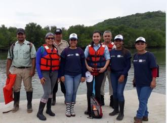 Programa Saneamiento de Panamá reforesta área de manglar de la Bahía de Chame