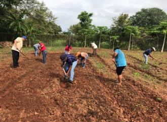 Autoridades del MIDA y MEDUCA promuevenPrograma de Huertos Escolares en escuelas de Los Santos