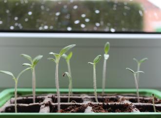Emisión de Bonos Verdes de la CAFfavorecerá proyectos de Panamá, Ecuador y Perú