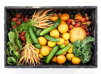 Día Mundial de la Alimentación: Hambre cero