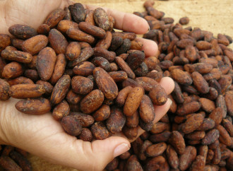 Chocolate panameño elegido como uno de los mejores en competencia internacional