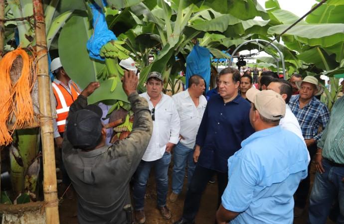 Reactivación de la producción bananera, otro logro del Gobierno y la empresa privada para la generación de más empleos