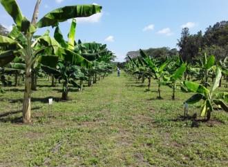 El MIDA establecerá 20 escuelas de campo en la provincia de Coclé durante el 2019