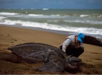 Subway® Latinoamérica invita a salvar a las tortugas del océano a través de una campaña de reducción y concientización sobre el plástico de uso único