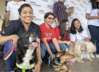 Nestlé Panamá primera oficina en Centroamérica en participar del Purina® Pets at Work