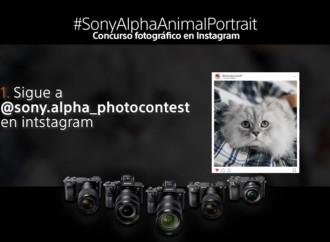 Captura la mirada de tu mascota y participa en el concurso fotográfico de retratos de animales de Sony en Instagram