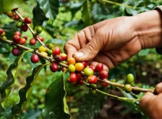 Evaluación y cata de café llegarán al CEA Caficultor en la XXII versión de Agroexpo