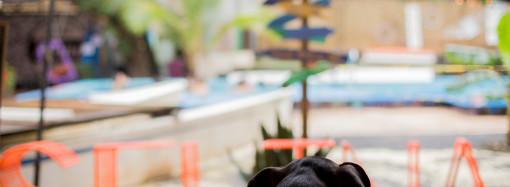 Día Mundial del Perro: Selina ofrece hospedaje a tu amigo de cuatro patas