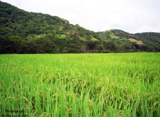 Impacto de las plagas de nematodos reducen en un 15% la producción agrícola mundial