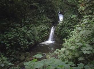La Reserva Biológica Bosque Nuboso Monteverde exhibirá servicios de caminata, tours guiados, voluntariados y hospedaje