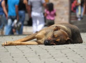 Rescatistas piden al Ejecutivo frenar el maltrato animal